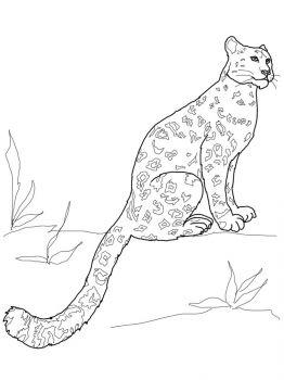 Snow-Leopard-coloring-pages-22