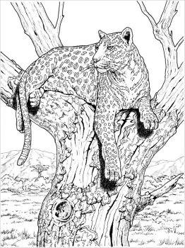 Snow-Leopard-coloring-pages-24