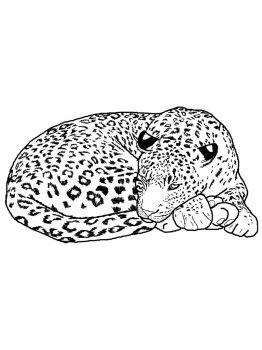 Snow-Leopard-coloring-pages-8