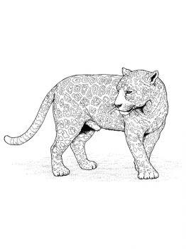 Snow-Leopard-coloring-pages-9
