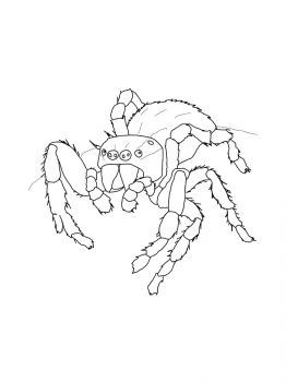 Spider-coloring-pages-11