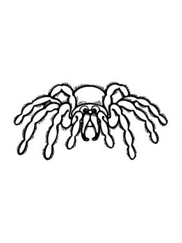 Spider-coloring-pages-15