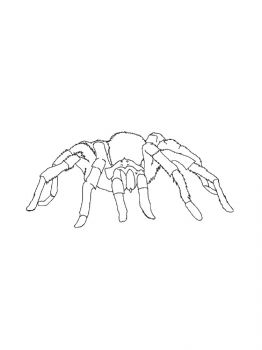Spider-coloring-pages-19