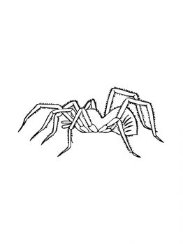 Spider-coloring-pages-21