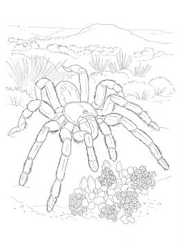 Spider-coloring-pages-27
