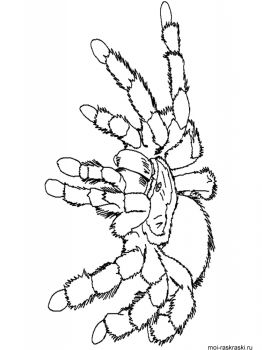 Spider-coloring-pages-39