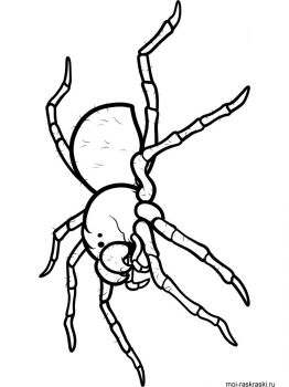 Spider-coloring-pages-41