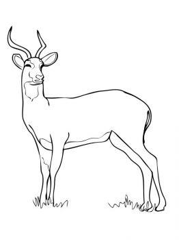 antelope-coloring-pages-7
