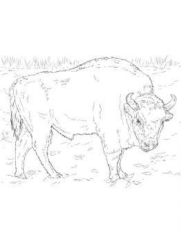 aurochs-coloring-pages-19