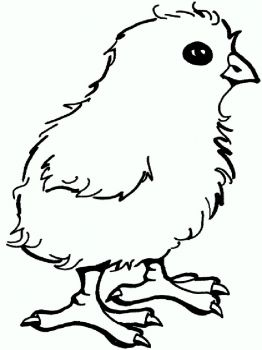 animals-baby-chick-coloring-pages-8