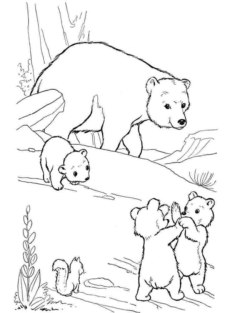 ausmalbilder bären  malvorlagen kostenlos zum ausdrucken