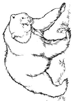 coloring-pages-animals-bear-8