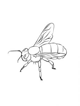 bee-coloring-pages-6