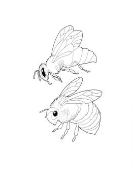 bee-coloring-pages-8