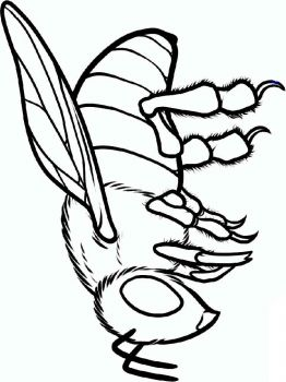 coloring-pages-animals-bee-6