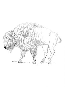 bison-coloring-pages-10