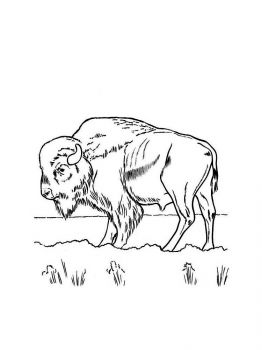 bison-coloring-pages-16