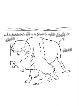 bison-coloring-pages-21