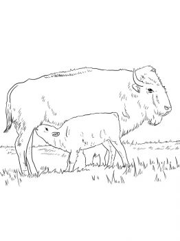 bison-coloring-pages-3
