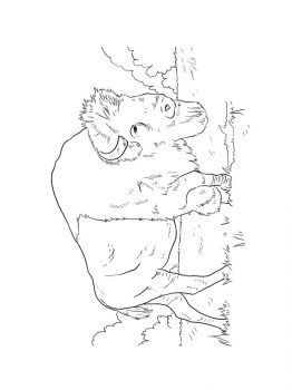 bison-coloring-pages-5