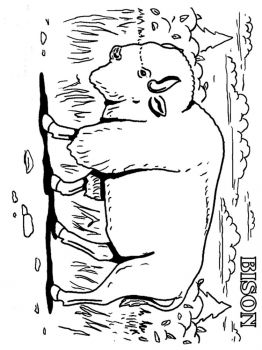 bison-coloring-pages-7