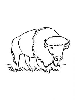 bison-coloring-pages-9