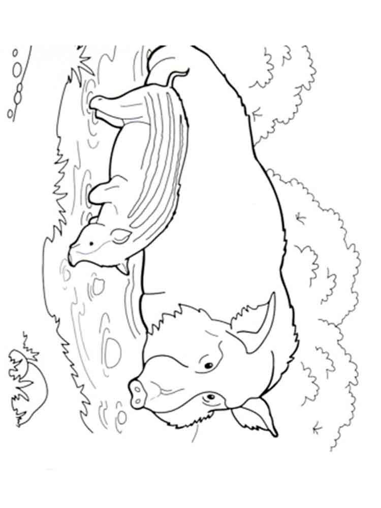 ausmalbilder wildschwein  malvorlagen kostenlos zum