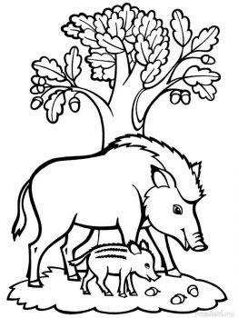 boar-coloring-pages-1