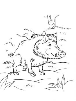 boar-coloring-pages-11