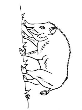 boar-coloring-pages-4