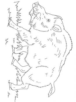 boar-coloring-pages-6