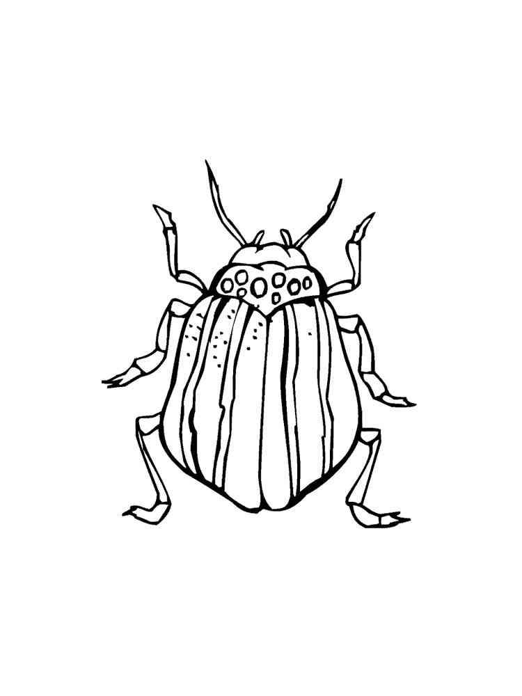 ausmalbilder käfer  malvorlagen kostenlos zum ausdrucken