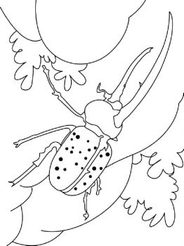 bug-coloring-pages-14