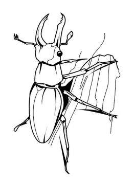 bug-coloring-pages-26