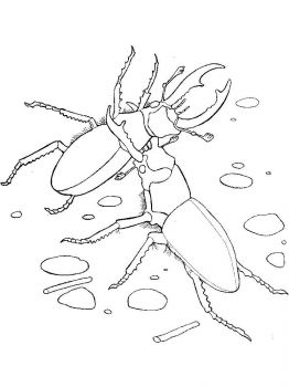 bug-coloring-pages-29
