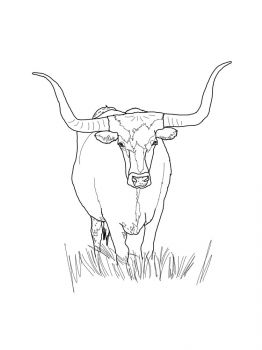 bull-coloring-pages-1