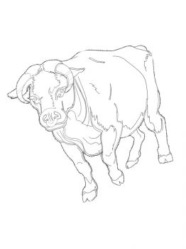 bull-coloring-pages-10
