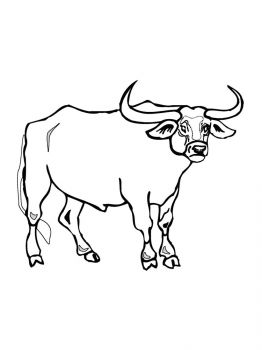bull-coloring-pages-16