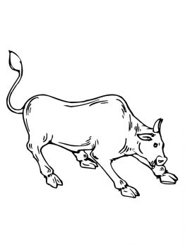 bull-coloring-pages-22