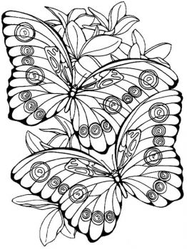 coloring-pages-animals-butterfly-15
