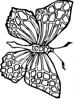 coloring-pages-animals-butterfly-19