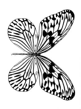 coloring-pages-animals-butterfly-22