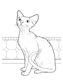 cat-coloring-pages-22