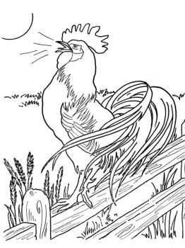 coloring-pages-animals-cock-1
