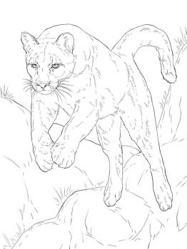 cougar-coloring-pages-11