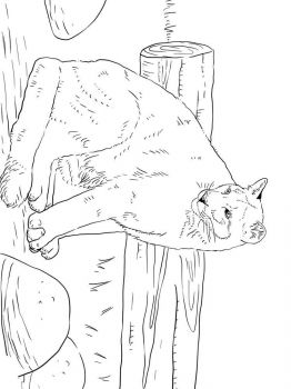 cougar-coloring-pages-2