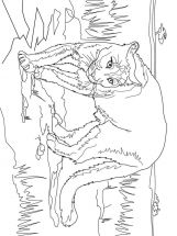 cougar-coloring-pages-3