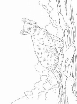 cougar-coloring-pages-4