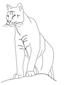 cougar-coloring-pages-6