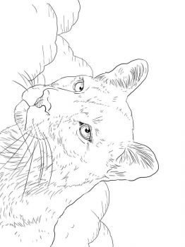cougar-coloring-pages-7